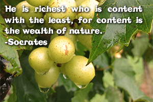 Finance | He is richest who is content with the least, for content is the wealth of nature. -Socrates | Venture Consulting Group, Inc.